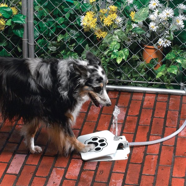 Doggie Water Fountain - Provide a continuous flow of drinking water to your dog even when you are busy