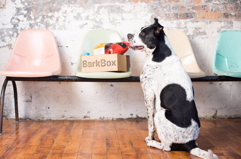 Bark Box Dog Goodie Box - Get a monthly box of treats, toys & chews for your pup