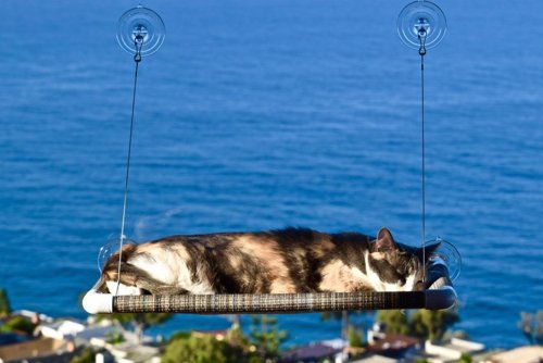 Kitty Cot Cat Perch - This cat perch mounts to any window, giving your kitty a place to lounge in the sun while you wait on them