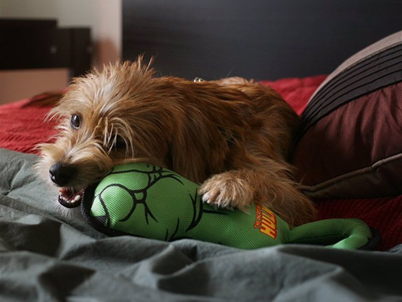 Hulk Fist Dog Pull Toy - Get ready for a superhero tug of war