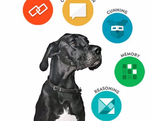 Find the Genius in Your Dog with Dognition