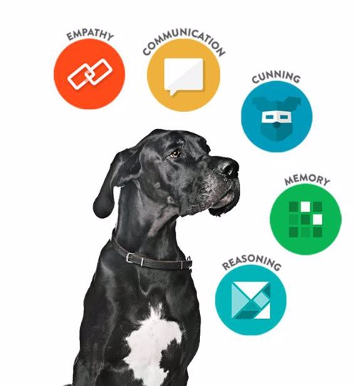 Find the Genius in Your Dog with Dognition - Fun, science-based games to help reveal how your dog sees the world