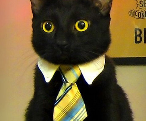 Cat Or Dog Business Tie Expertly Chosen Gifts