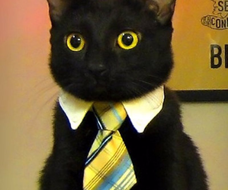 Cat or Dog Business Tie - Make sure Mr. Fluffums is always looking purrrfectly professional with the business cat tie.
