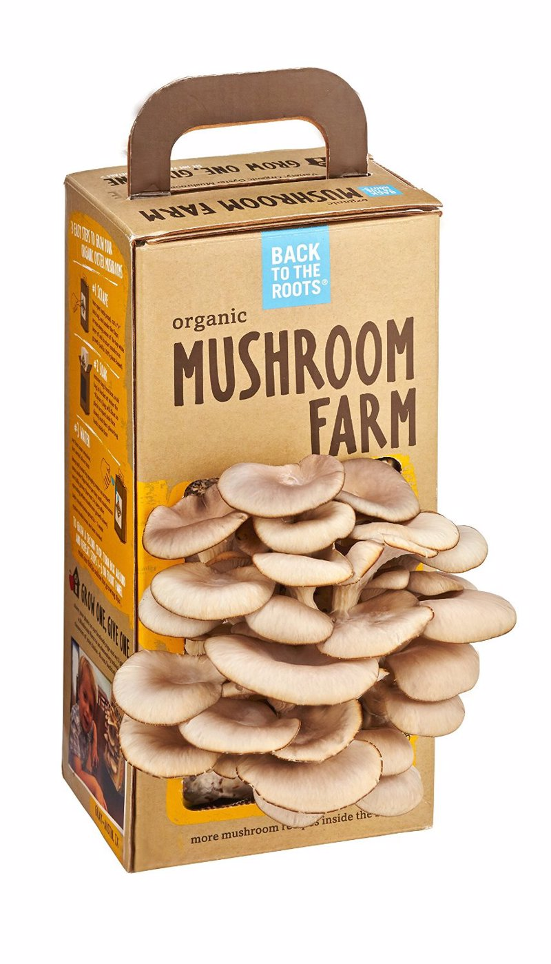 Organic Mushroom Farm - Grow your own mushrooms at home
